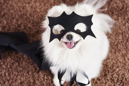 Happy dog in superhero costume Stock Photo