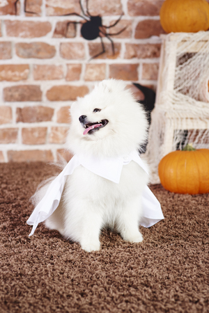 Playful puppy wearing a white cape