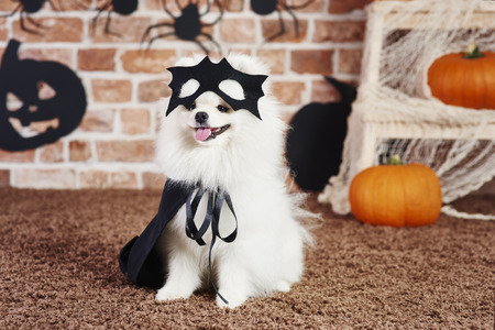 Cute puppy with black cape and mask Stock Photo