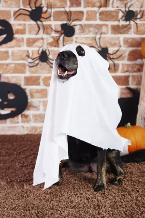 Spooky dog in ghost costume Stock Photo