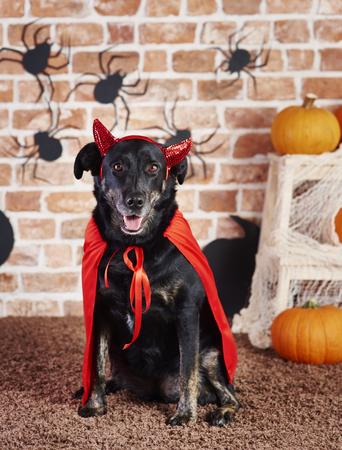 Happy dog in devil costume