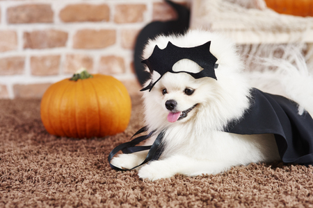 Cute puppy in halloween costume Stock Photo