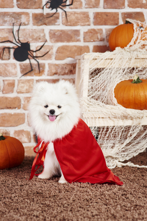 Puppy wearing a halloween costume