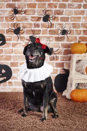 Happy dog in halloween costume