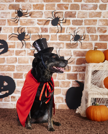 Dog wearing red cape and black hat Stock Photo