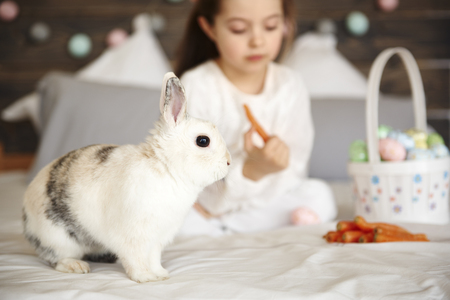 Side view of confused rabbit sitting on bed