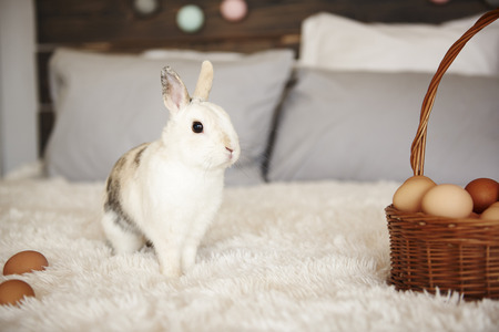 Shot of easter bunny and easter basket of eggs