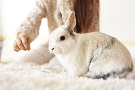 Childs hand feeding the rabbit Imagens