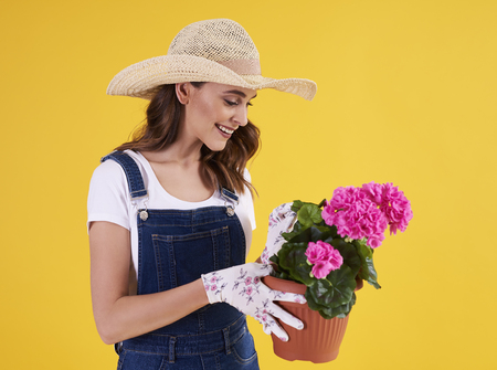 Young gardener holding flower pot with beautiful pelargonium Stock fotó