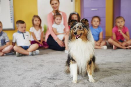 Happy shetland sheepdog in the preschool