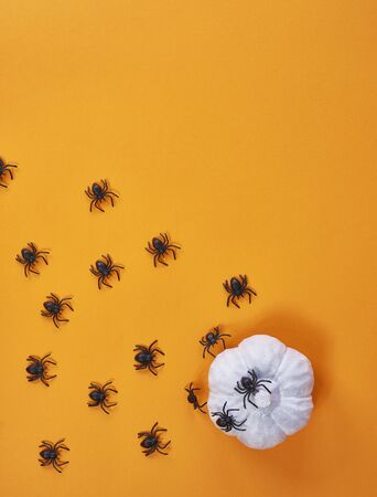 Background with spiders and pumpkin for Halloween Reklamní fotografie