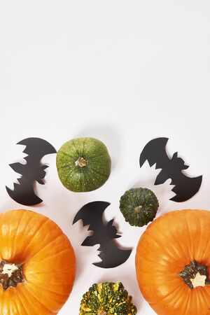 Pumpkins and bats on white  background