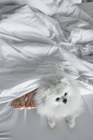 Dog and his sleeping owner in bed Фото со стока
