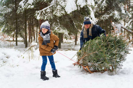 Pulling the Christmas tree with grandpa 스톡 콘텐츠