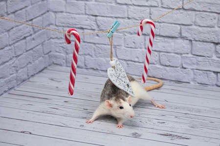 Christmas decorations hang from a rope. White wooden figured heart. Candy on a stick for christmas. The rat is sitting