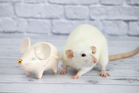 A decorative funny white cute rat stands next to a porcelain figurine in the shape of a rat with a golden nose