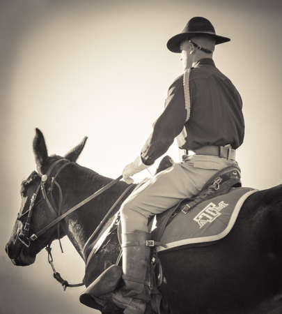 Military Horseman Banco de Imagens