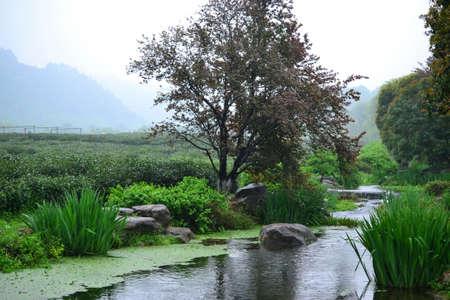 little brook next to Chinese tea fields in Hangzhou, Zhejiang, China