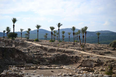 Palm trees in antique Megiddo Armageddon Archaeological site, Jezreel Valley, Lower Galilee, Israel Stock Photo