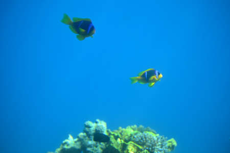 Fish in Coral reefs and water plants in the Red Sea, Eilat