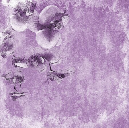 Orchid flowers background photo