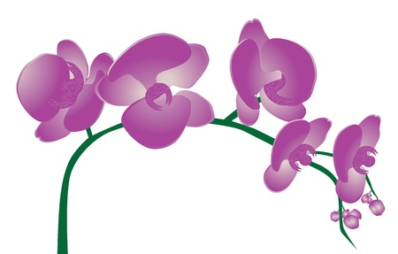 orchid isolated: Orchid Flowers Illustration