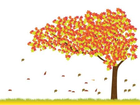 Maple tree in autumn season Vector