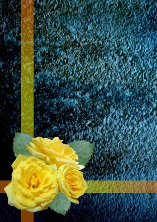 yellow roses: Yellow roses on a blue