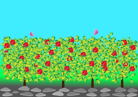 rose garden: Rose Garden Illustration