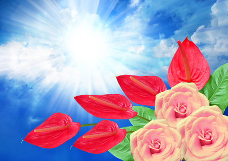 anthurium: Roses and anthurium flower with a cloudy blue sky and sun