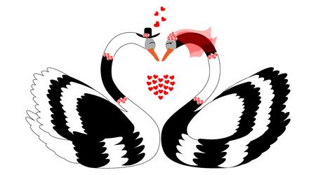swimming swan: Loving swans-vector illustration Illustration