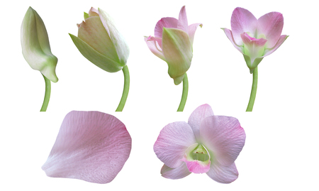 Orchid flower- Stages of growth photo