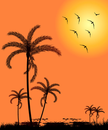palm trees silhouette: Silhouette palm trees at sunset with birds