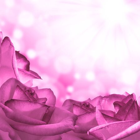 purple rose: Romantic background with roses and place for text Stock Photo