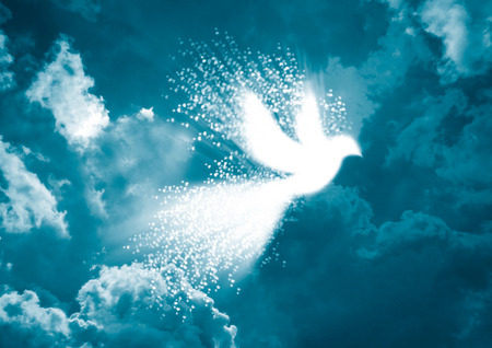 Peace dove- White dove with heart flying in blue sky background