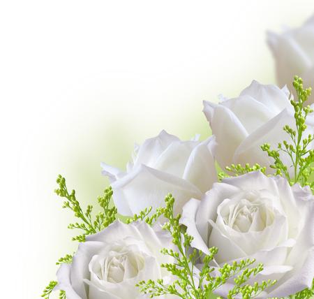 rosas blancas: rosas blancas frontera hermosa aislada en el fondo blanco