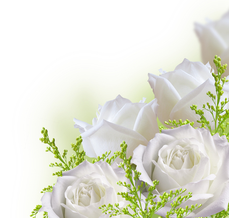 Beautiful white roses border isolated on white background Standard-Bild
