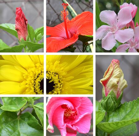 Beautiful nature bright flower collage of photos 写真素材