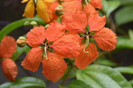 Beautiful orange flowers in the garden background Stock Photo