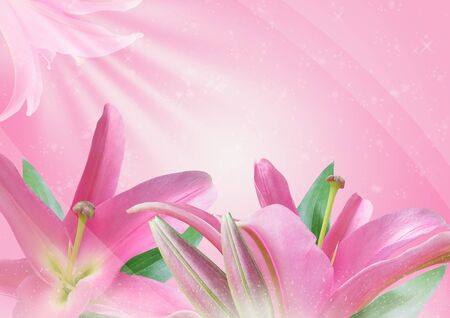 Beautiful pink lily on a pink background