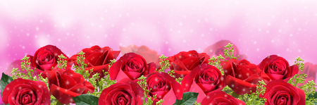 Red roses on pink background with space for your text 写真素材