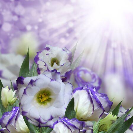 Purple eustoma flowers on bright purple background