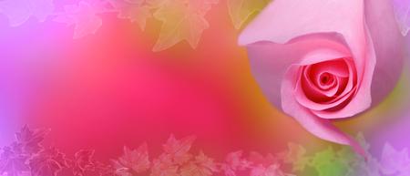 Fresh pink rose flower on ivy background-banner for website
