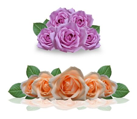 rosas naranjas: Bouquet of pink and orange roses on a white background