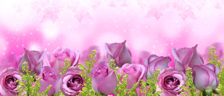 Beautiful roses background-banner