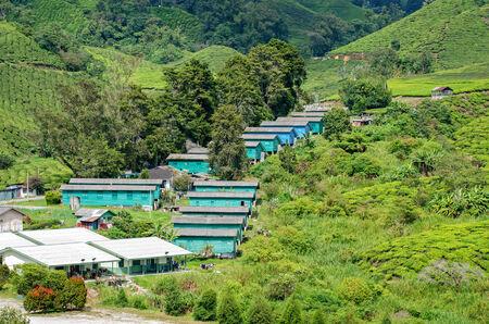 cameron highlands: Cameron Highlands Tea Plantations