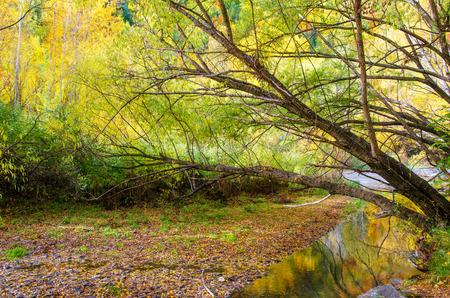newzealand: Autumn landscape of Arrowtown in New Zealand