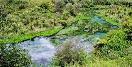 Blue Spring which is located at Te Waihou Walkway,Hamilton New Zealand. It internationally acclaimed supplies around 70% of New Zealands bottled water because of the pure water. Stock Photo