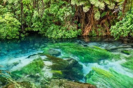 te: Blue Spring which is located at Te Waihou Walkway,Hamilton New Zealand. It internationally acclaimed supplies around 70% of New Zealands bottled water because of the pure water. Stock Photo