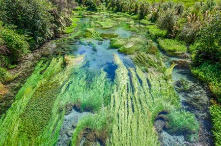 internationally: Blue Spring which is located at Te Waihou Walkway,Hamilton New Zealand. It internationally acclaimed supplies around 70% of New Zealands bottled water because of the pure water. Stock Photo
